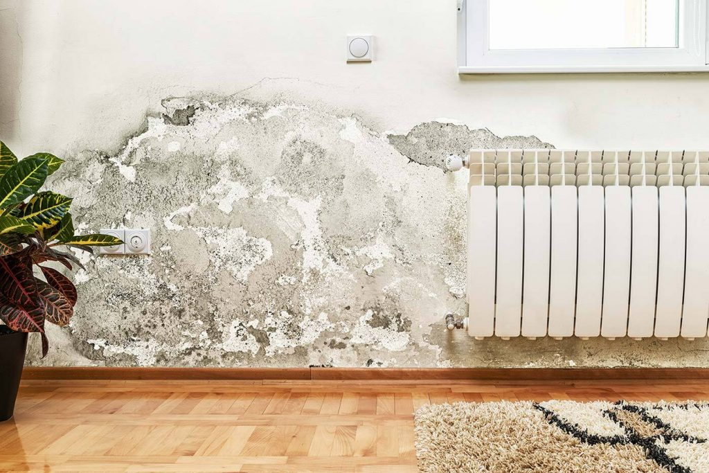 home inspector mold
